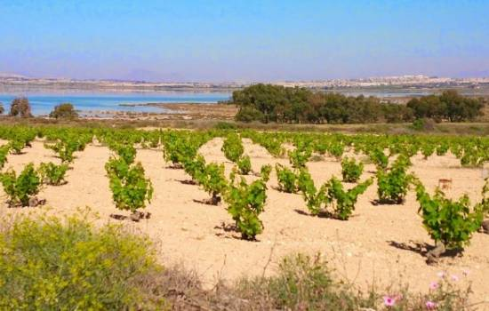 ​Eco-tourism routes launched in La Mata, Torrevieja, Costa Blanca, Spain